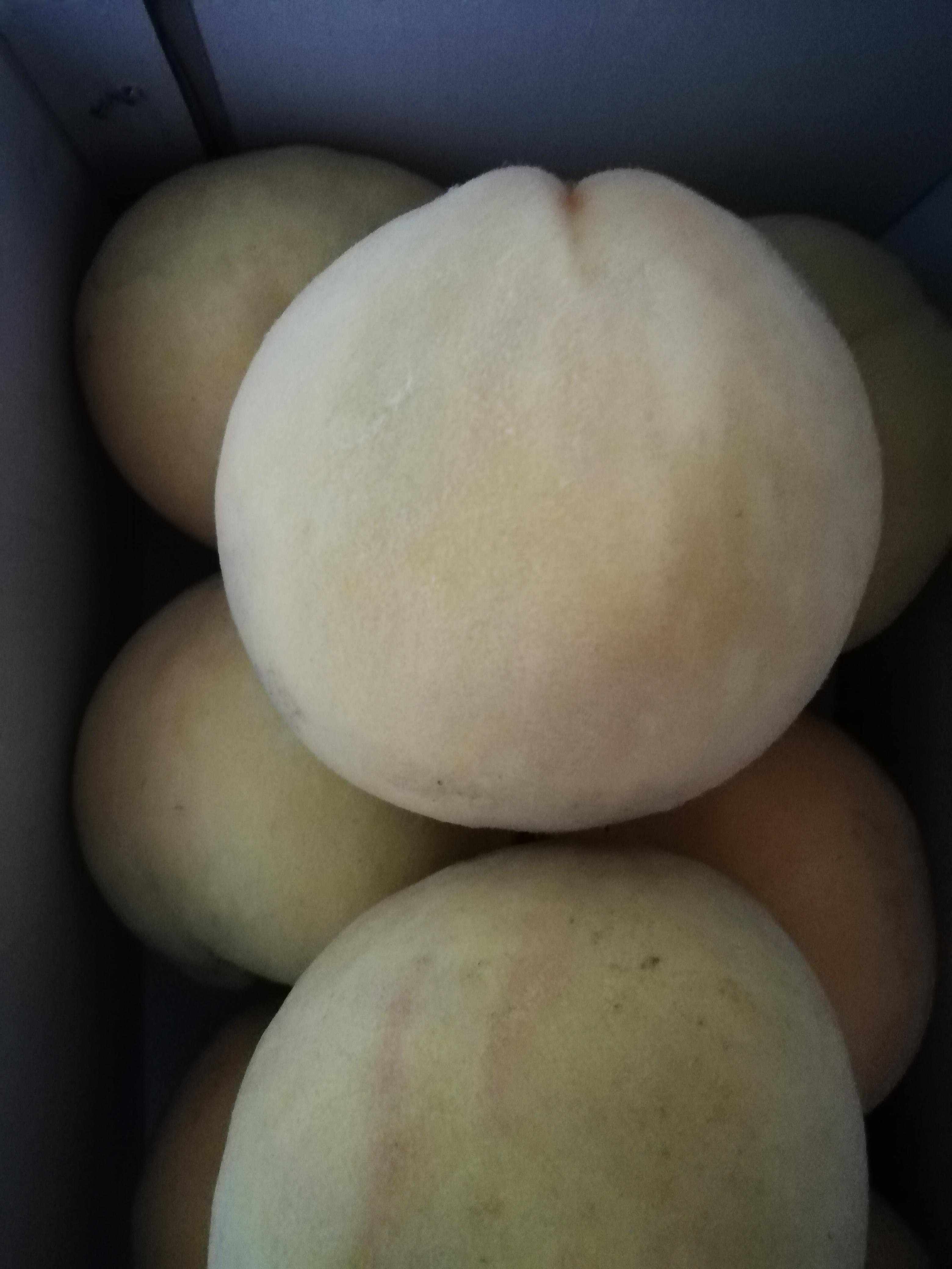 我第一次买这家桃子,哇!太好吃了,一口气吃了3个,比往年别地方买的好吃多了,我家老公不爱吃桃的,也吃了一个,吃了还一个劲的点头,我决定了以后想买黄桃就这家了